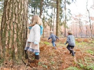 Natur, verstecken spielen, Bäume, Laub