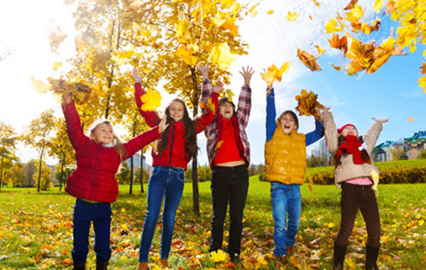 Bäume, Blätter, Wald, spielen
